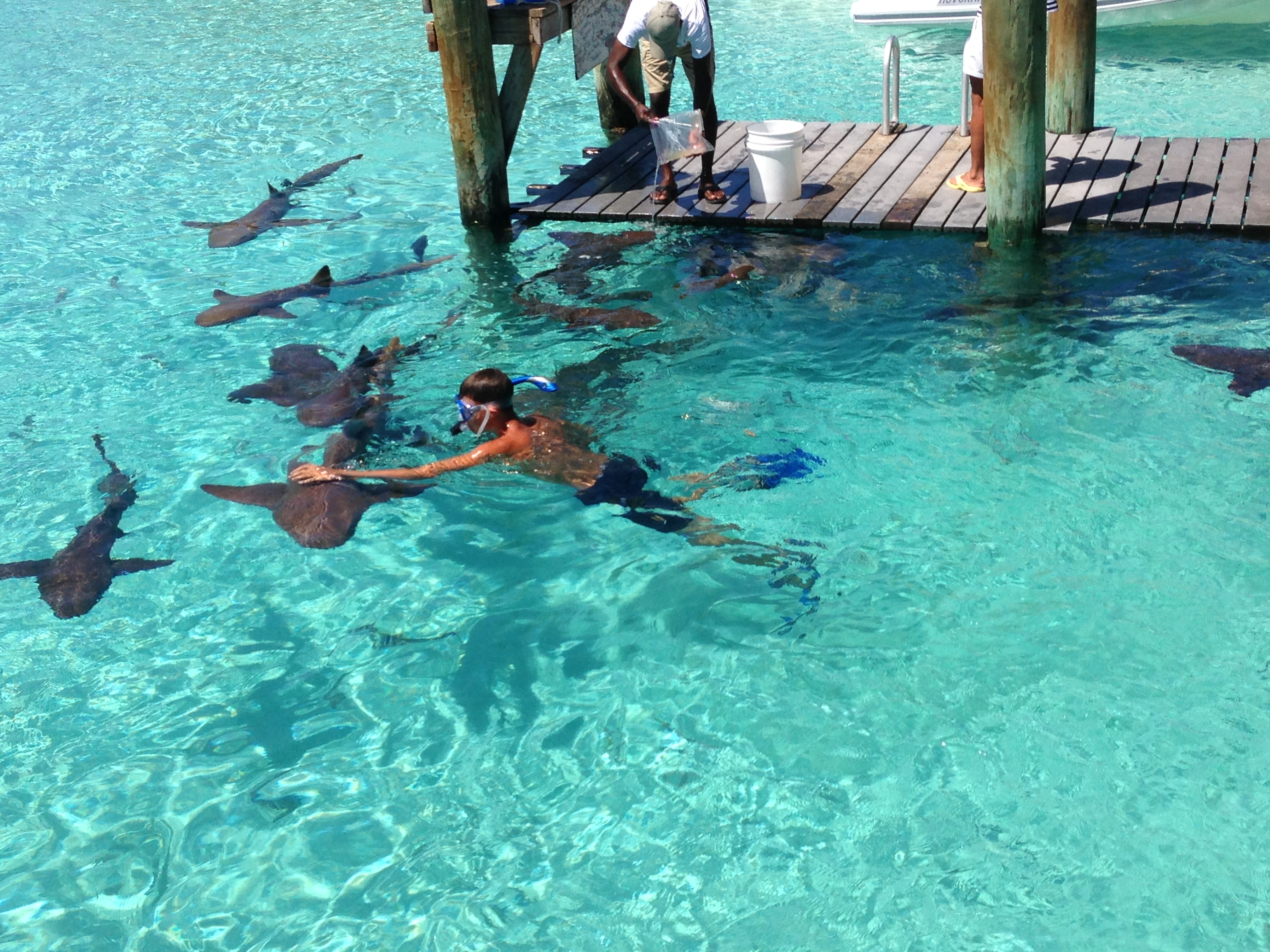 Compass Cay April 17 – 20 then back to Staniel Cay till the